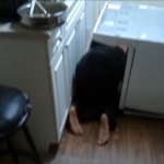"VIDEO: When PLANKING Goes Wrong + Is ""Owling"" The New ""Planking""?"