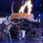 UniverSOUL Circus SFTA-3
