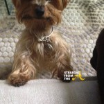 RIP Kenya Moore Dog Velvet StraightFroMTheA 7